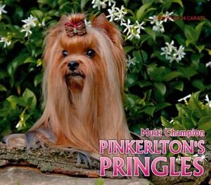 PINKERLTON'S PRINGLES
